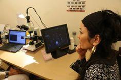 昨日、Kiyomi Mackayさんに同行させていただき、Naturopath(自然療法士)の和美先生のお仕事…