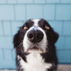 Cute photo of a dog with a flower on its nose