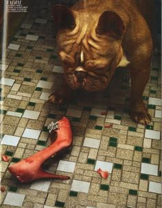 Best editorial shoot ever. Shoes worst enemy. Marie Claire France ~ photography by Peter Lippmann