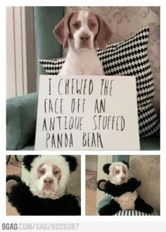 This is the best dog shaming I have ever seen.