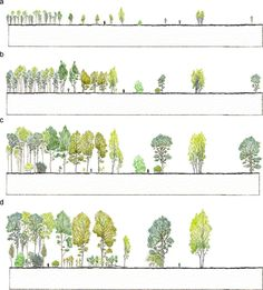 Anders Busse_Urban Forestry & Urban Greening - Some visual aspects of planting design and silviculture across contemporary forest management paradigms – Perspectives for urban afforestation