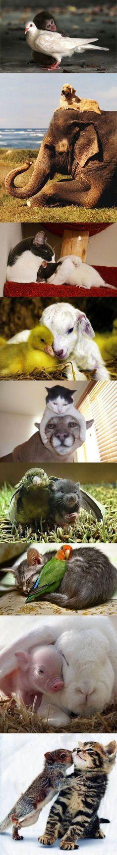 Die ungewöhnlichsten Tierfreundschaften | Webfail - Fail Bilder und Fail Videos: