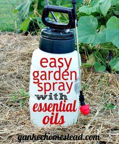 Easy Garden Spray with Essential Oils - http://yankeehomestead.com/2015/06/23/easy-garden-spray-with-essential-oils/