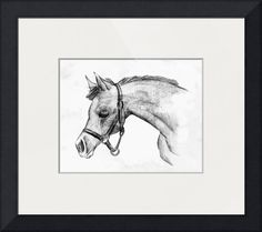"""""""foal head"""" by Jane (Jinx) Tellam, Buxton, Peak District // a portrait of a Thoroughbred foal wearing a headcollar, drawn with pencils, by J.M.Tellam BA (hons) copyright Mindgoop // Imagekind.com -- Buy stunning fine art prints, framed prints and canvas prints directly from independent working artists and photographers."""