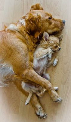 Best buddies (Maybe Fee and Belle will be like this one day.)