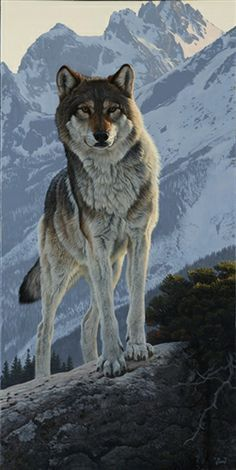 The Surveyor - wolf painting by Al Agnew.