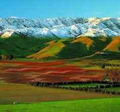 New Zealand vineyards!