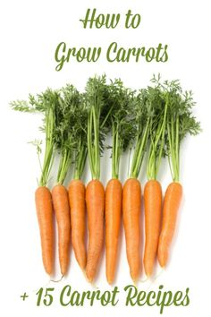 How to Grow Carrots ... plus 15 Carrot Recipes! I had no idea that it was this simple to grow carrots. Bookmarking!!