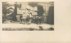 1912 GUAM ORIGINAL rppc CARABAO-DRAWN CART  Bull-dog-cart  MARIANAS ISLANDS M.I.