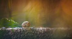 escargot Snails, Nature, Flowers, Animals, Snail, Naturaleza, Animales, Animaux, Animal