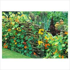 I have been interested in building this kind of fence ever since I read about it several years ago. Like the idea of planting climbing plants under it.