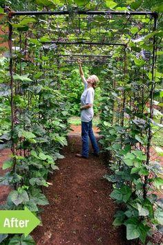 Bean Tunnel, Veggie Garden: fun way to structure climbing vine vegetables.