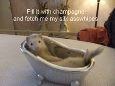 fancy ferret