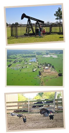 Oil Ranch - 50 acres of action-packed fun for families, corporate events, field trips, and birthday parties