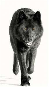 sirius black ;)