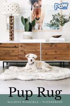 Meet the most beloved dog bed in the world. Made from human-grade memory foam all of our dog beds are designed to ease joint pain and provide maximum support for your four-legged friend. Building A Dog Kennel, Baby Animals, Cute Animals, Primitive Bathrooms, Orthopedic Dog Bed, Pet Accessories, Dog Care, Dog Mom, Dogs And Puppies