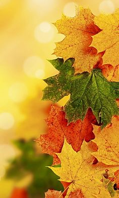 29 Ideas For Photography Wallpaper Iphone Autumn Leaves Iphone Wallpaper Herbst, Fall Wallpaper, Flower Wallpaper, Nature Wallpaper, Mobile Wallpaper, Wallpaper Backgrounds, Thanksgiving Wallpaper, Autumn Scenes, Autumn Photography