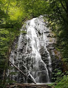 a waterfall surrounded by dense green forest