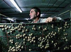 raising snails pros cons