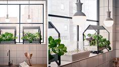 IKEA Krydda/Växer I want this!!!