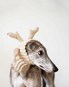 "littlealienproducts: ""Greyhound-Deer Print by AmyRothPhoto """