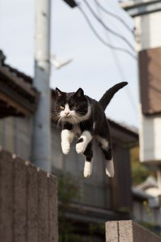 Jumping cat in mid air. I Love Cats, Crazy Cats, Cool Cats, Funny Cats, Funny Animals, Cute Animals, Kittens Cutest, Cats And Kittens, Jumping Cat