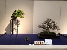 Kokufu 2016
