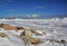Northern Living Photograph  March 4, 2016 Today we went up to the Mackinac Bridge to photograph the ice in the straits and to have lunch in Cheboygan. It's a nice day trip for us. The ice is so very cool... no pun intended, lol. When you walk out onto the frozen water, the ice is crystal clear and you can see down to the bottom. We walked out about 20 feet, heading towards the large piles of ice, but we heard the ice crack underfoot and decided it was time to head back to the shore.