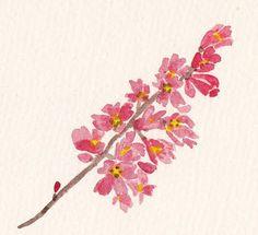 FLOWER FLOWER: 미선나무 꽃-尾扇 / White Forsythia