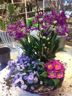 Sammenplantning Plants, Creative, Plant, Planets
