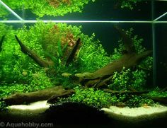 http://akuariumhias.blogspot.com/2012/10/ikan-hias-air-tawar_31.html