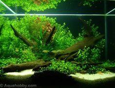 serene #aquarium #fish