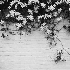 The building was abandoned but the flowers were still there, blooming, waiting