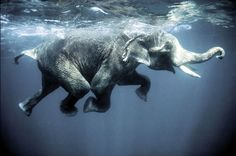 Yes, I want to go swim with the elephants :)