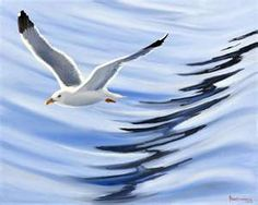Seagull in graceful flight.
