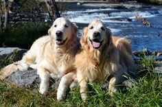 Brie and Ben on the shores of the Madawaska River Pakenham Ontario