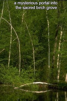 Happiness 6-15:  a mysterious portal into the sacred birch grove.  http://winsloweliot.com/category/happinesses/