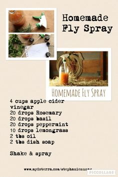 DIY homemade fly spray for horses.  #doterraessentialoil  www.mydoterra.com/stephanienunag