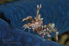 over the blue by ClaudioCeresi #nature #photooftheday #amazing #picoftheday #sea #underwater