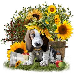 Full Square/Round Drill Cute diamond painting Sunflower with puppy Embroidery Cross Stitch Home Decor Diamond Painting Pictures To Paint, Print Pictures, Dog Pictures, Cute Pictures, Paw Print Art, Art Prints, Beagle Art, Black Paper Drawing, Baby Food Jar Crafts