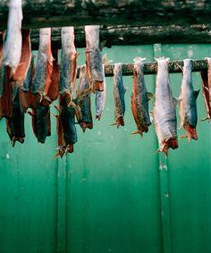 Drying Fish, Tiniteqilaaq. Inuit of East Greenland, 2009. Photo © Jeroen Toirkens