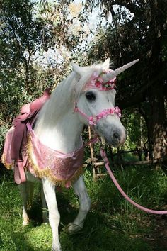 Uploaded by ⓚⓐⓗ. Find images and videos about beautiful, fantasy and unicorn on We Heart It - the app to get lost in what you love. Unicorn And Fairies, Unicorn Fantasy, Real Unicorn, Unicorn Horse, Unicorns And Mermaids, Cute Unicorn, Unicorn Gifts, Unicorn Cakes, Cute Horses