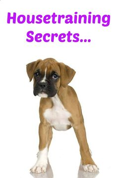 Want to learn a few puppy potty training secrets? Learn these and many other dog training secrets using these hands-off methods. Click here to read more>> www.dog-names-and...