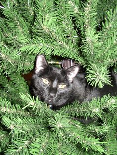 Image result for black cats in christmas tree humor
