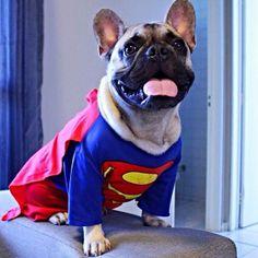 """Superdog"" French Bulldog #perro #perros #mascotas #humor"