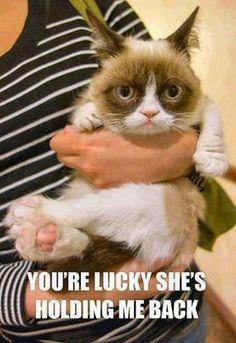Grumpy cat :):-):-):-):-):-):-):-):-):-):-):-):-):-):-):-):-):-):-):-):-):-):-):-):-):-):-):-):-):-):-):-):-)