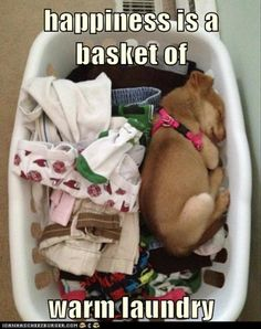 happiness is a basket of warm laundry - I had a little yorkie who would bury himself in the warm laundry..he once even tried to hop in the dryer while the door was open! lol