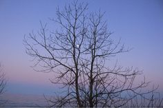 Openlands Lakeshore Preserve-Highland Park -IL, Winter evening,