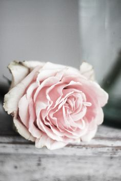 roses3.jpg (610×915)