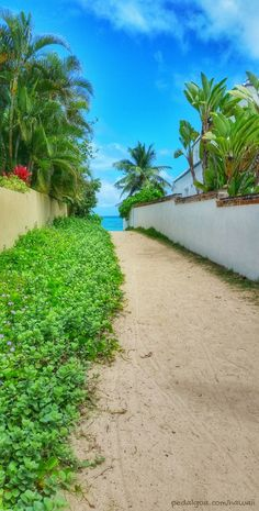 Path to Lanikai Beach, Hawaii, named one of the best beaches in the world by TripAdvisor